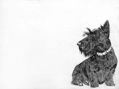 Home Page of GrandyArt dealers in contemporary british art Little Dogs, Big Dogs, Animal Drawings, Drawing Animals, Westies, Portraits, Pretty Pictures, Dog Lovers, Art Photography