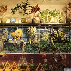 love, only. #bekleriz #plants #plantlove #kokedama #terrarium #plantshop #magic #magical #aquarium #triangle #homedecor #bitkiaskina #hangingplants #dekorasyon #shop #localshop #love #justlove #airplant #havabitkisi #reindeermoss #moss #colorful #happiness #istanbul #kadıköy #moda #sutopya