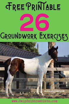 Horse ground training exercises are a great way to refine your equine relationship. This article includes a free printable of 26 groundwork exercises. Some would be great for a pony club or kids camp too!