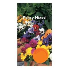 Suttons Pansy Seeds Suttons Pansy Seeds. (Barcode EAN=5011567342439) http://www.MightGet.com/april-2017-1/suttons-pansy-seeds.asp