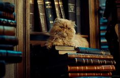 Ces livres sont à moi !!