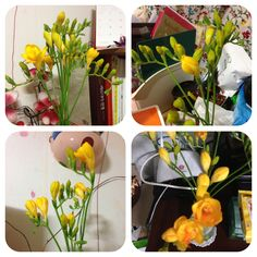 Narcissus for 4 years