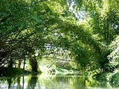 Bamboo forms an Arch over the River