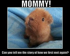 I remember over 18yrs and over 50 piggies' worth of first meets! :)