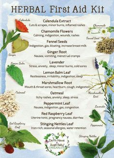 Herbal first aid kit (calendula, chamomile, fennel seeds, ginger, lavender, lemon balm, marshmallow root, oatmeal, peppermint, red raspberry leaf, stinging nettle)