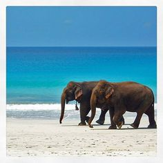 "Dunstan Surfwear auf Instagram: ""Pretty easy life, don't you think? Happy National Elephant Day #dunstansurfwear #nationalelephantday"
