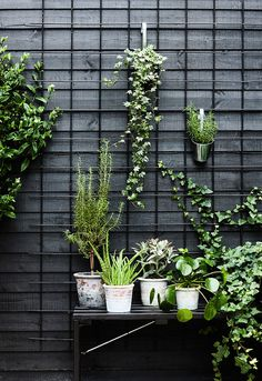 Urban Garden Ideas and Inspiration For City Apartments Idea for front patio space maybe do a similar piece inside for indoor/outdoor plants? The post Urban Garden Ideas and Inspiration For City Apartments appeared first on Outdoor Ideas. Outdoor Plants, Outdoor Gardens, Indoor Outdoor, Outdoor Spaces, Air Plants, Outdoor Fencing, Plants Indoor, Cactus Plants, Outdoor Living