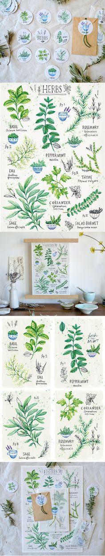 Garden Herbs - rekersdreesdesign.de