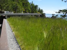 Pender Island Green Roof  Mix of native grass seed