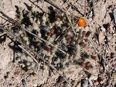 cactus de salta - Buscar con Google