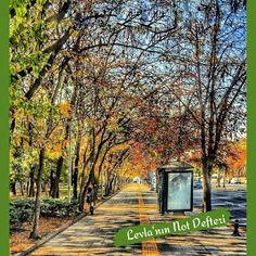 Beytepe Yolları ve Ankara Ankara, Country Roads, Plants, Blog, Blogging, Plant, Planets
