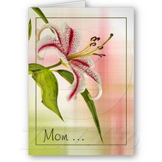 Star Lily Floral Mother's Day Card from Zazzle.com