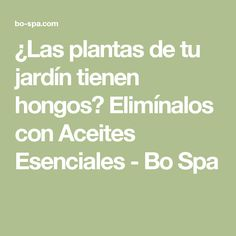 ¿Las plantas de tu jardín tienen hongos? Elimínalos con Aceites Esenciales - Bo Spa
