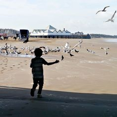 Happiness is seeing birds on sands!  #fms #fms_photoaday #fms_littlethings #westonseafront #sea #seagulls #crows #birds #seafront #morningwalk #happiness #worldoflittles #developinglife #dirtisgood