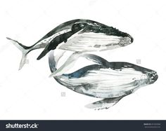 Watercolor whales painting.  Hand painted realistic illustration isolated on white background. Realistic underwater animal art. Couple in love.