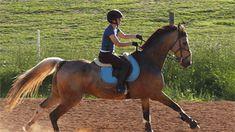 Beautiful horse, such a lucky girl.