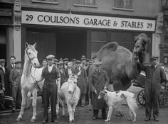 Stable companions at Endell Street in London appear in 'Song of the Drum' at Drury Lane Theatre. Get premium, high resolution news photos at Getty Images London Pictures, London Photos, Photos Du, Old Photos, Vintage Photos, London History, British History, Vintage London, Old London