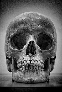 Human Skull Vines and Roses Skeleton Flowers Black Leather Keychain