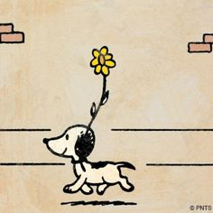 The first Snoopy!