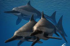 Ichthyosaurus anningae by NTamura (print image)