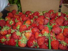 Ontario strawberries - just came in last night! Dessert anyone? #BerryBerryNice