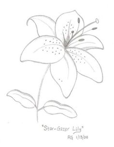 Star Gazer Lily Drawing Photo By Rlgooch