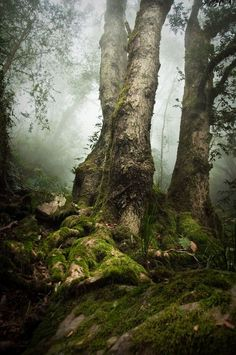 bluepueblo:  Misty Forest, Australia photo via shabbir