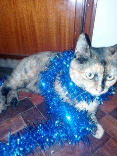 Nesta foto está a minha gata ,Tâmara, super estilosa!!