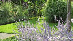 Pokażę nasz ogród - strona 223 - Forum ogrodnicze - Ogrodowisko