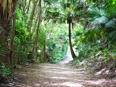 Stroll Through the Bermuda Arboretum: A lush and lively 22-acre national park in the heart of Devonshire Parish, the Bermuda Arboretum is home to a collection of trees unique to the island, including the famed Bermuda Cedar.