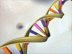 Revelan un proyecto para crear un genoma humano sintético