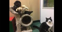 Cat, Dog and Rat Left at Shelter Find the Perfect Home Together - We Love Cats and Kittens