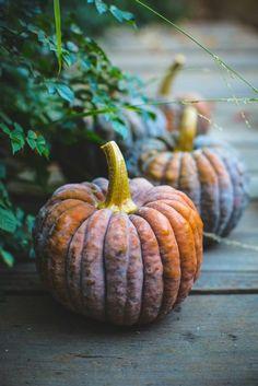 all the sweet prettiness of life pumpkin Samhain, Mabon, Thai Dessert, Autumn Aesthetic, Happy Fall Y'all, Autumn Day, Autumn Leaves, Fall Days, Hello Autumn