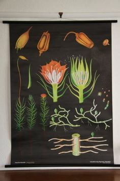 Moss Original Vintage Style Canvas Print Poster Chart German Map | eBay