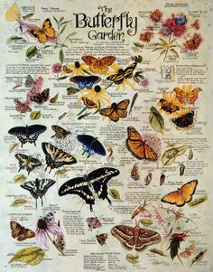 Lee Butterfly Garden Plants Insects Retro Vintage Tin Sign by R.