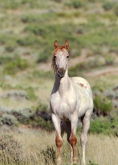 Mustangs always have the greatest colorings!