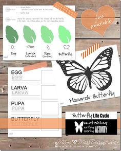 Butterfly Life Cycle Activity - Mama Miss