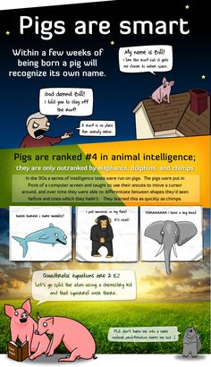 5 Reasons Pigs Are More Awesome Than You - The Oatmeal