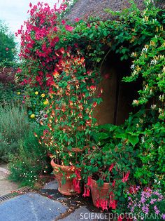 Hot Colors in a Cottage Garden