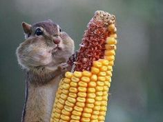 When the waiter asks how was the food!!