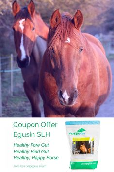 Today only 20% discount Egusin SLH, immediate digestive support for all horses and ponies. https://forageplus.co.uk/egusin-slh-horses-discount-coupon/#poweredbyforageplus