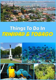 Top things to do in Trinidad and Tobago on vacation - Cruises, sightseeing, ziplines, cultural tours, day trips and excursions, hiking, nature and wildlife and more activities