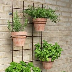Unique Lawn-Edging Ideas to Totally Transform Your Yard - The Trending House Balcony Garden, Herb Garden, Micro Garden, Edging Ideas, Lawn Edging, Plant Wall, Garden Accessories, Garden Planning, Garden Projects