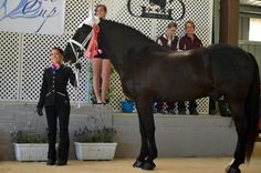 O.S. Sponsored Vaulting Coach, Saacha DeAmborossio from Above & Beyond Vaulters, sporting her perfectly tailored Kileyann Show Coat!  Get Saacha's classic look by clicking this photo!