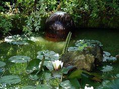Tips para el mantenimiento de los estanques...