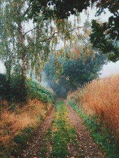 Bellasecretgarden — dpcphotography:   Autumn Bridleway