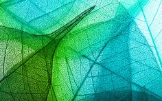 Download wallpapers leaf texture, green leaf, green abstraction, 3d green leaf