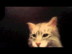 Cat Puppet Belts Out Journey's Don't Stop Believin'