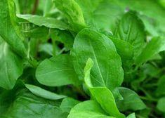 A MAGYAROK TUDÁSA: Gyógyító növényeink 1./b rész Spinach, Plant Leaves, Vegetables, Plants, Food, Veggies, Essen, Vegetable Recipes, Planters
