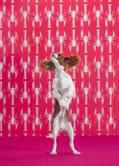 Catherine Ledner - DOGS - 1